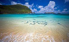 Kingfish at Ned's Beach, Lord Howe Island