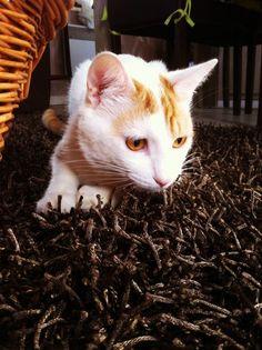 Tigooh on www.yummypets.com