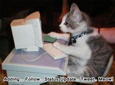 #Cat #Cats #Funny