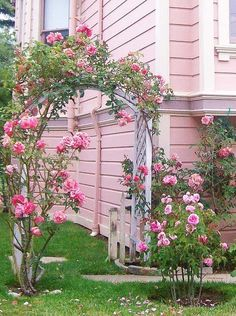 arch of pink roses in front of a pink house :)
