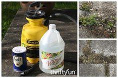 Salt and Vinegar Weed Killer Recipe