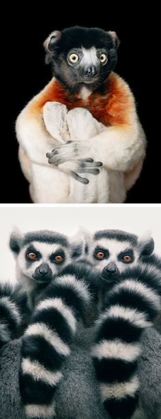 Endangered animal portraits by Tim Flach