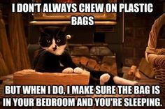 Attack Of The Funny Cats: I don't always chew on plastic bags but when I do I make sure the bag is in your bedroom and you're sleeping