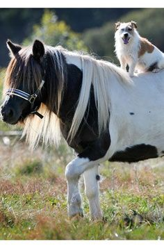 30 Unlikely Animal Friendships   Stylist Magazine  -  We'd like to think that after this photo, the Shetland Pony and Cowboy-esque dog rode off together into the sunset.