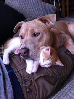 Cat is a pillow. Dog is a blanket.