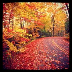Love the beauty of fall!