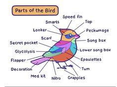 A bird's anatomy