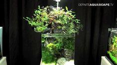 Aquascaping - The Art of the Planted Aquarium 2013 Nano pt.7 - YouTube