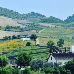 Dow's en haut de la colline !!! #dows #pinhão #vinho #wine #porto #douro #trip #winetrip #portugal #instawine #picoftheday by wine_withme