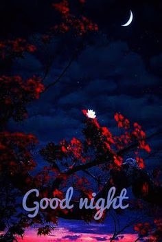 Lovely Good Night Images New Good Night Images, Romantic Good Night Image, Lovely Good Night, Good Night Baby, Beautiful Good Night Images, Good Night Gif, Good Night Sweet Dreams, Good Night Moon, Have A Good Night