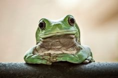 26 Cute Frog Pictures