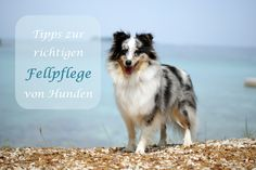 Tipps zur richtigen Fellpflege für unsere Hunde! :) Dogs, Nursing Care, Doggies, Tips, Pet Dogs, Dog