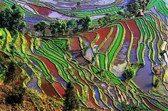 The Brilliant, Natural Colors Of The Yuanyang Rice Terraces