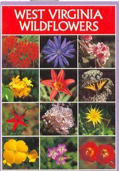 West Virginia wildflowers TAG by vintage postcards