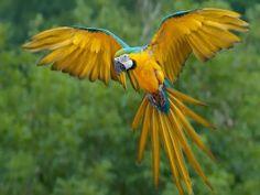 Loro mostrando sus alas