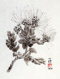 Ohia Lehua www.shintakahashi.com