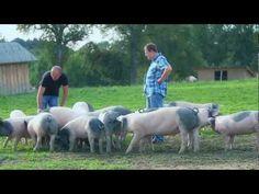 Imagevideo über Weideschweine.  Artgerechte Tierhaltung abseits von Lebensmittelskandalen gibt es also doch! Wir sind froh, dass wir dieses Imagevideo produzieren durften, denn dadurch haben wir eine Bezugsquelle für wirklich hochwertiges Fleisch gefunden.  Video produced by imagevideo.at - Heinz Moser + Brigitte Baier-Moser