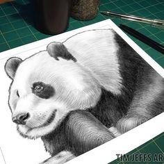 """PREVIEW #19: Intricate Ink Sketches 2 """"Your Ideas"""" The Giant Panda! 2016 was a wonderful year for the Panda! They were downgraded from 'Endangered' to 'Vulnerable'!! (Huge Applause!!) Panda's are now a step further away from extinction, and this is a testament to how important animal awareness and conservation efforts are at saving our precious wildlife! Thanks to Keelie Anne Mennie, DaLinda Friend, Lucy Coto Blanco, and Flo Thewis for suggesting this lovable bear!! #panda #pandas #panda…"""