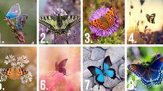 Test Image, Fractions, Illusions, Random, Hilarious, Character Trait, Beautiful Butterflies, Beginning Sounds, Veneers Teeth