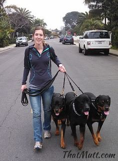 What to charge for dog walking #dogwalking #rotties