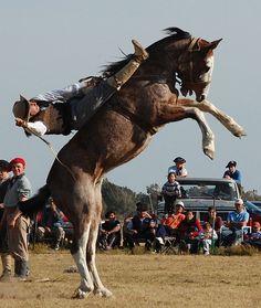 jineteada en San Antonio De Areco, Buenos Aires, Argentina Rio Grande, San Antonio, Cowboy Art, Horse Breeds, Rodeo, Cowboys, Ranger, Cool Pictures, Places To Visit