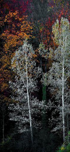 35+ Best Autumn iPhone Wallpapers - Templatefor