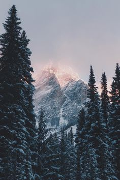 Shared by Thomas. Find images and videos about tree, winter and forest on We Heart It - the app to get lost in what you love.