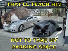 THAT'LL TEACH HIM  NOT TO TAKE MY PARKING SPACE http://cheezburger.com/9110052864