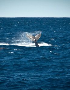 #whale tail