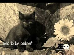 owl and cat friendship... YouTube is only a happy place when you don't read the comments, though...