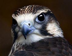 bird portrait - Birds Wallpaper 131177 - Desktop Nexus Animals on We Heart It. http://weheartit.com/entry/11402722