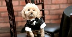 """I Want To Go To Puppy Prom! 