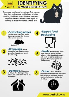Mice are small warm-blooded animals that are found in almost all parts of the wo… – The Environmental Alternative For Safer Pest Control Green Pest Control, Mice Control, Founded In, Warm Blooded, Alternative, Queenslander, Animals, Insulation, Garden