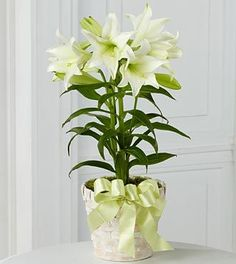 White easter lily flower white lily bouquet meadowlark farm easter lily plant the most popular floral item to give as a gift during easter flowers on in vancouver offers deliveries to all areas around vancouver bc negle Choice Image