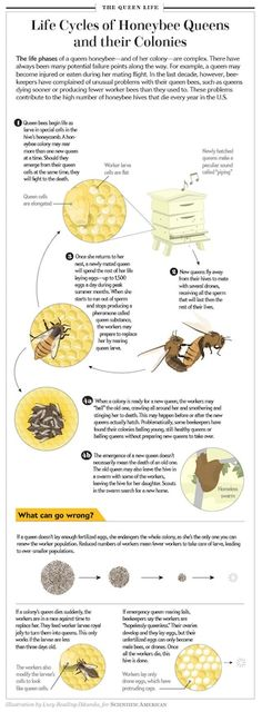 Why Are Queen Bees Living Shorter Lives? | The Huffington Post