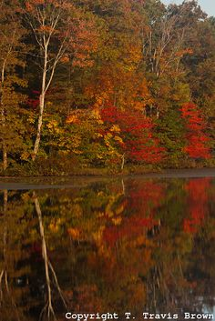Autumn Forest Reflecting on a Lake in the Clark State Forest, Indiana. Credit: Brown's Wild Images