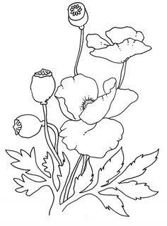 Anzac Day Poppies Coloring Pages Poppy Coloring Page, Free Coloring Pages, Printable Coloring, Flower Coloring Sheets, Poppy Drawing, Anzac Day, Art Folder, Remembrance Day, Flower Template