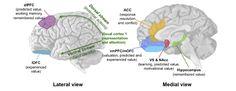 Neuro-Branding