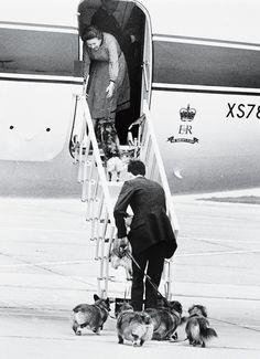 At Heathrow, Elizabeth greets her pack.