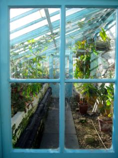 Charles Darwin's greenhouse, Down House