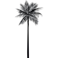 Palm Tree Print, Palm Leaves Print, Palm Tree Art, Palm Tree Wall Art,... (27 RON) ❤ liked on Polyvore featuring home, home decor, wall art, fillers, backgrounds, art, black fillers, decorative, doodles and quotes