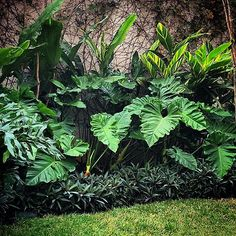 Beginner's Guide To Tropical Landscaping Design Plans – My Best Rock Landscaping Ideas Tropical Backyard Landscaping, Tropical Garden Design, Garden Landscape Design, Landscaping With Rocks, Front Yard Landscaping, Tropical Plants, Tropical Gardens, Landscaping Design, Bali Garden