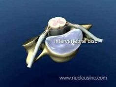Neck Pain: Cervical Spine Anatomy