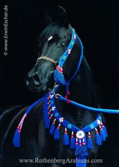 Gorgeous black Mare all dressed up (by Erwin Escher)