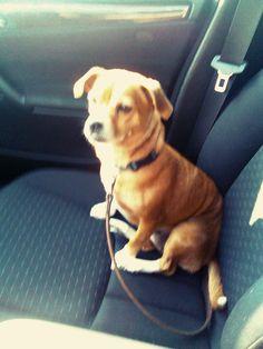 la mia Toby