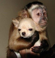 Really hugging that dog!