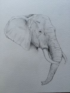 Pencil drawing, elephant