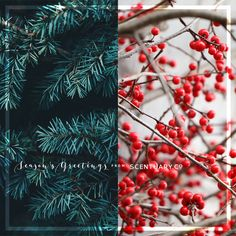 Scentuary.Co wishes one and all a Happy Christmas