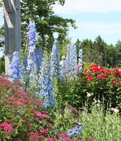 Summer at the Coastal Maine Botanical Gardens