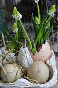 Mrs. Pedersen's garden: March 2015